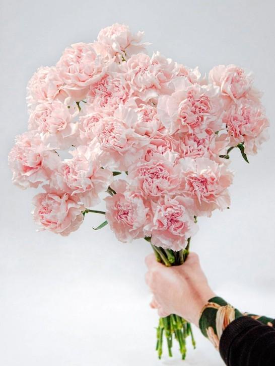 Моно-букет из нежно-розовых гвоздик «Нимфа»